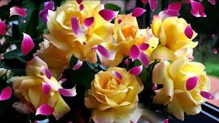 Прекрасной девушке прекрасные цветы