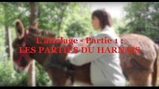 L'attelage - Partie 1 : LES PARTIES DU HARNAIS