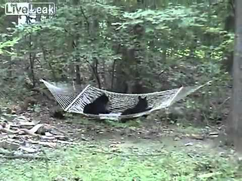 Black bear cubs Discover something new!