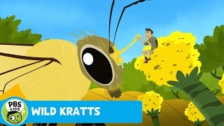 Wild Kratts: Beast the Bee thumbnail