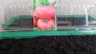 Сажаем томаты на рассаду.Всегда с урожаем)))