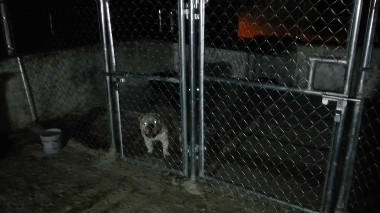 Jaulas para perros de alambrados 3311728884 youtube for Jaulas de perros