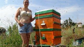 Моя жена пчеловод или душа пасеки в настроении, пчела