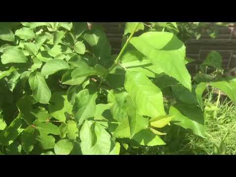 Плодовые деревья и виноград из семян