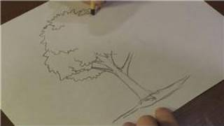 Nature Drawings : How to Draw a Walnut Tree