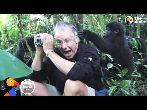 People Surprised by Wild Animals | The Dodo Best Of