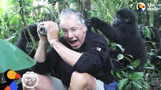 People Surprised by Wild Animals | The Dodo Best Of thumbnail