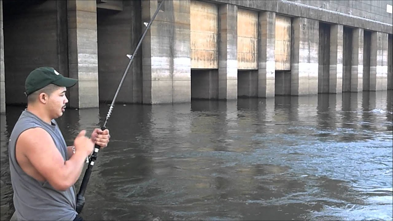 Kentucky snagging youtube for How much is a fishing license in kentucky