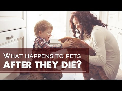 Spiritual - What happens to pets after they die
