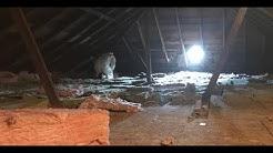 Attic Restoration from Wildlife Damage
