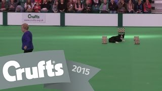 Dog Obedience Championships - Part 6 | Crufts 2015