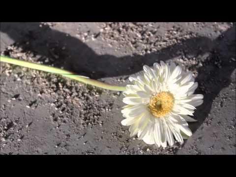 Yellow Camren Fanfic Trailer