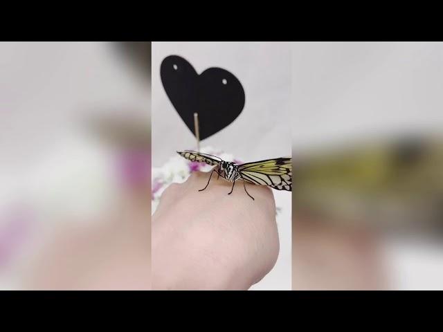 Доставим живых бабочек