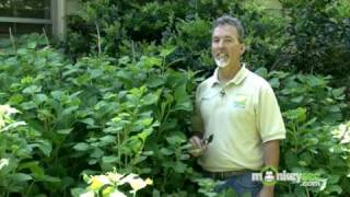 June Gardening Tips - Summer Pruning