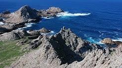 Farallon Islands Live Web Cam | California Academy of Sciences