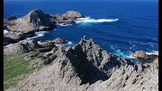 Фото Farallon Islands Live Web Cam | California Academy Of Sciences