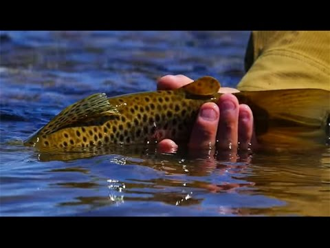 North Patagonia- Argentina, Fly fishing with Andes Drifters.