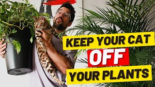 How do I STOP MY CAT from EATING MY PLANTS