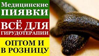 видео купить пиявки в москве