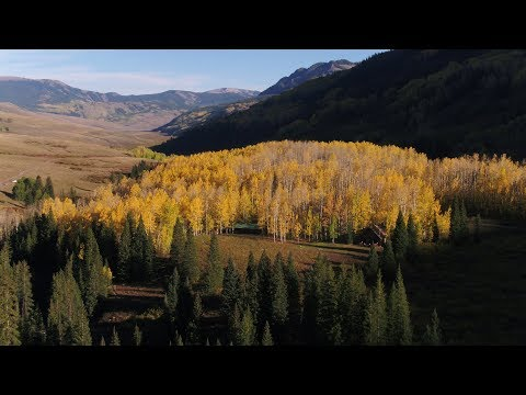 Fruity Pebbles and a Sea of Gold - Autumn Travel Film