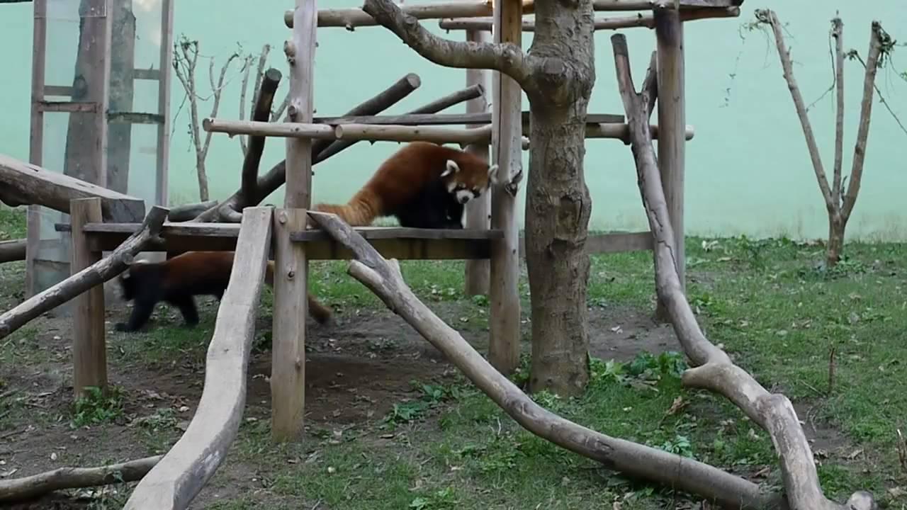 動物 公園 千葉