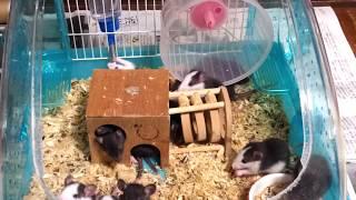我が家で産まれた17匹の子ネズミちゃん達.