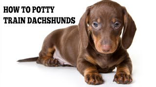 How To Quickly Potty Train Dachshunds