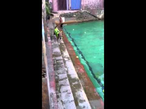 Doggie Swim at Venetian Pool