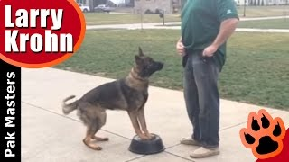 How to teach any dog a competition style heel