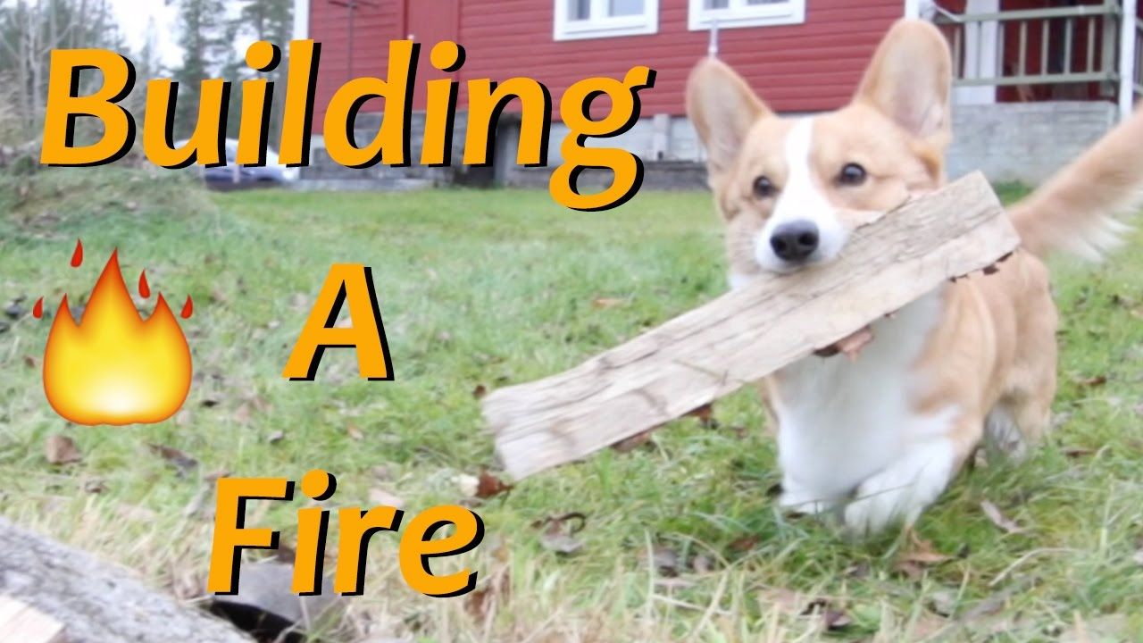 Building Up A Campfire Topi The Corgi Youtube Its Uninterrupted