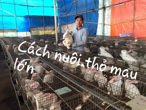Kỹ thuật nuôi thỏ mau lớn, đạt hiệu quả tối đa . 0978329438