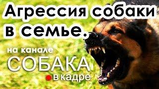 Агрессия собаки к членам семьи. Воспитание и дрессировка.