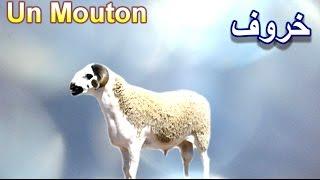 Apprendre 100 Animaux en français et en arabe pour les enfants