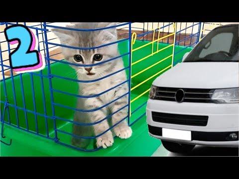 Спасение котенка. Кот Макс и собака Алиса идут на поиски.