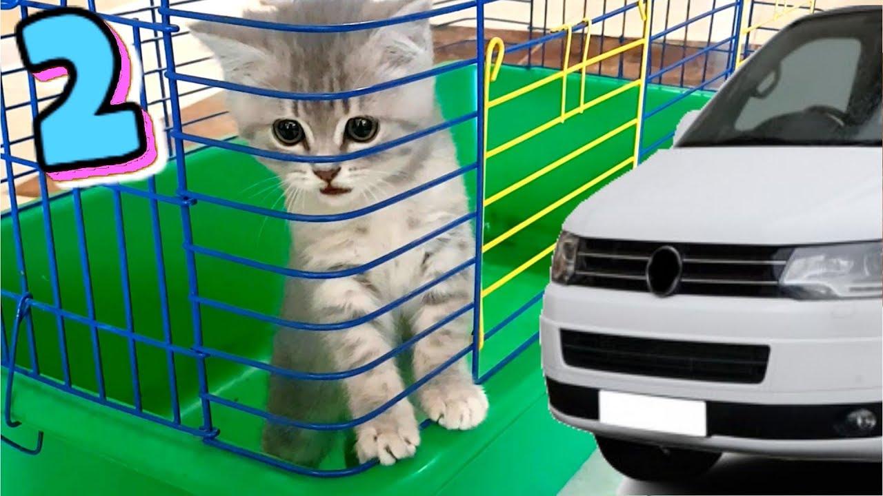 Спасение котенка. Кот Макс и собака Алиса идут на поиски ...