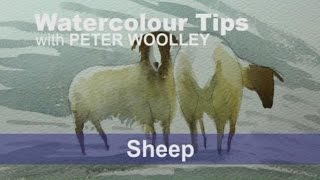 Watercolour Tip from PETER WOOLLEY:  Sheep