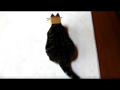 まる、猫になる- Maru becomes a cat.-