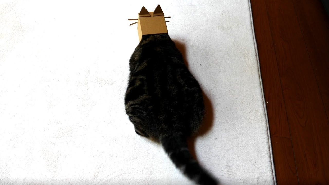 まる-猫になる-maru-becomes-a-cat