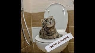 Туалет для кота.