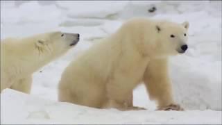 Глобальное потепление.  Таяние ледников.  Документальный фильм National Geographic