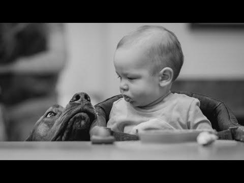 Rhodesian Ridgebacks Teach Baby to Share