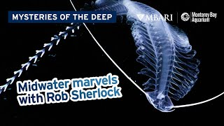 Mysteries of the Deep with MBARI's Rob Sherlock — Midwater Marvels of Monterey Bay