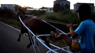Horsy    harness horse racing in phillipines san fernando pampanga)