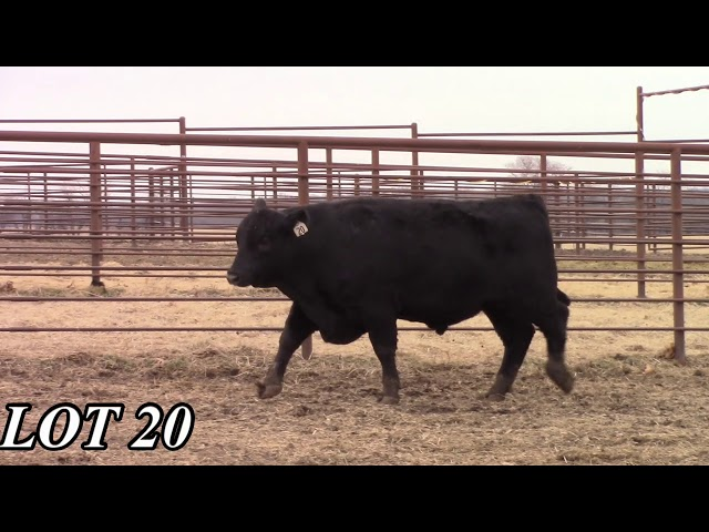 Mead Angus Farms Lot 20