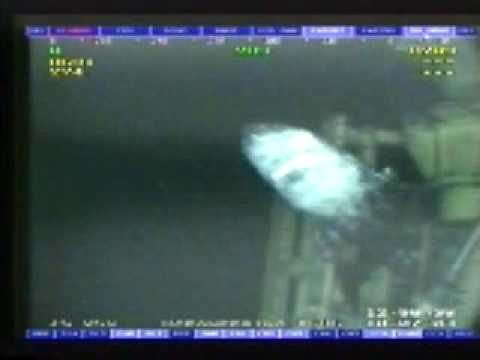 Giant Shark Gulf of Mexico Oil Rig caught on rigs cameras