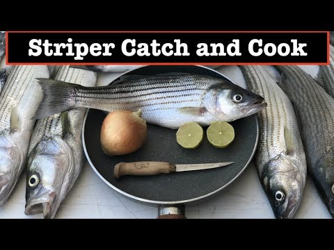 Catch And Cook Fish - Striped Bass Boils In Lake Mead, Nevada