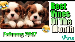 Best Vines Of The Month | February 2017