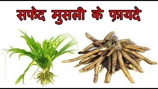 सफेद मुसली के फ़ायदे | Health Benefits of Safed Musli | Safed Musli for Weight Loss
