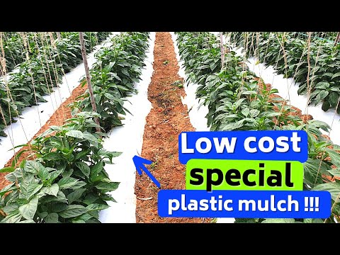 Plastic Mulching, Selction, application,types, success stori