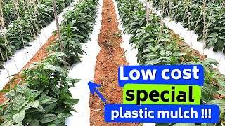 Plastic Mulching, Selction, application,types, success stories